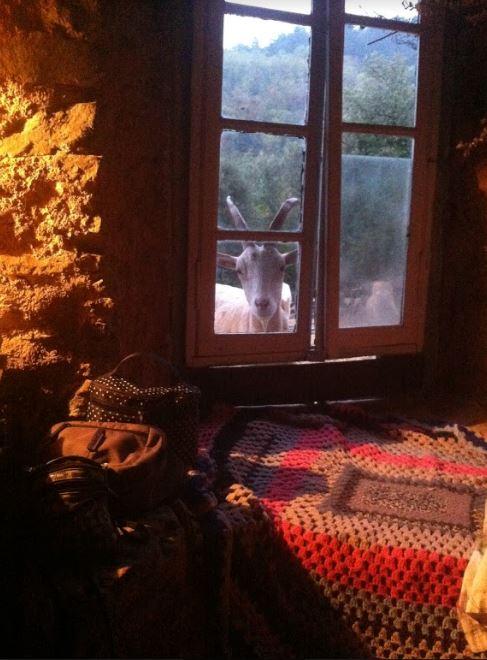 WA4 geitjes tijdens zonnegroet